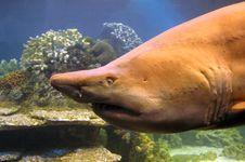 Free Shark. Stock Photos - 2737043