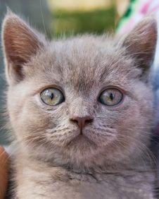 Free Little Kitten Stock Photo - 2737350