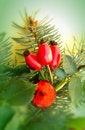 Free Christmas Decorations Stock Photos - 27307703