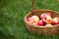 Free Apples In Wicker Basket Stock Photos - 27307763