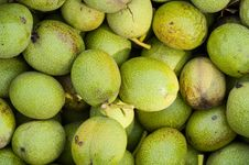 Free Background The Green Walnuts Stock Images - 27301104