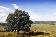 Free Summer Tree Stock Image - 27307471
