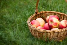 Free Apples In Wicker Basket Stock Photos - 27307763
