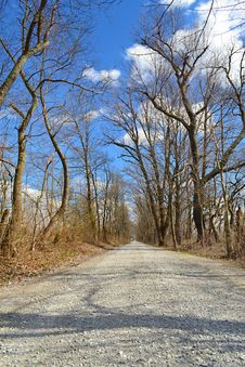 Free Tree Lined Street During Winter Stock Images - 27311154