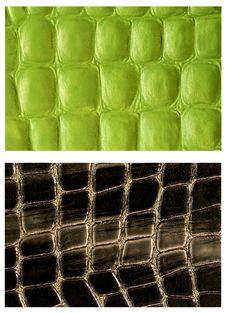 Free Pattern Snake Skin Leather Stock Photography - 27318632