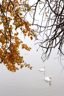Free Autumn Day At Lake Balaton,Hungary Royalty Free Stock Photo - 27318785