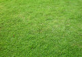 Free Asia Green Grass Background Stock Photos - 27329623