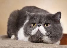 Free Ambushed Cat Royalty Free Stock Photos - 27323128