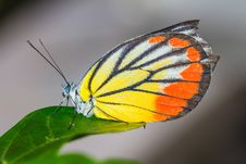 Free Close Up Of Butterfly Royalty Free Stock Photos - 27328198