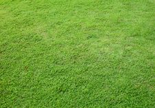 Free Asia Green Grass Background Stock Photos - 27329623