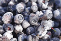 Free Frozen Bilberries Close-Up Royalty Free Stock Photography - 27332917
