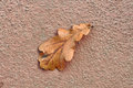 Free Dry Fallen Oak Leaf On Concrete Stock Photos - 27333373
