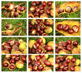 Free Chestnuts Set Stock Image - 27335151