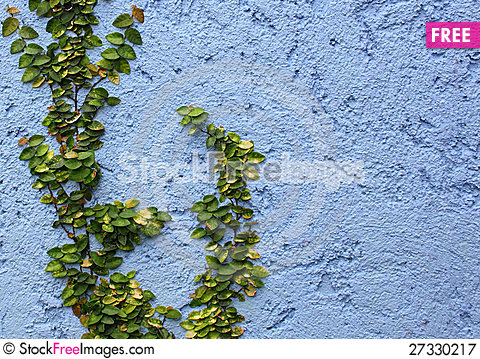 Free Closeup Plant On Abstract Rough Royalty Free Stock Photography - 27330217