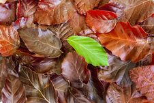 Free Pile Of Leaves Stock Photo - 27331340