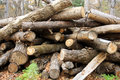 Free Wood Preparation In A Taiga Stock Photography - 27348122