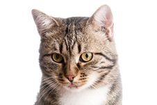 Close-up Portrait Of Cat With Tongue Out Stock Photography