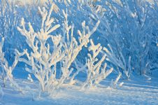 Free Winter Background. Stock Image - 27345551