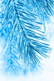 Free Winter Background Stock Photography - 27345632