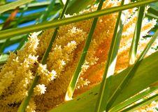 Free Blooming Tree Stock Image - 27346991