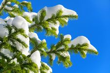Free Winter Background Stock Photos - 27349843
