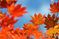 Free Autumn, Maple Leaves Stock Photos - 27350393
