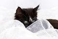 Free Kitten Peeping Through Fabric Stock Photography - 27356132