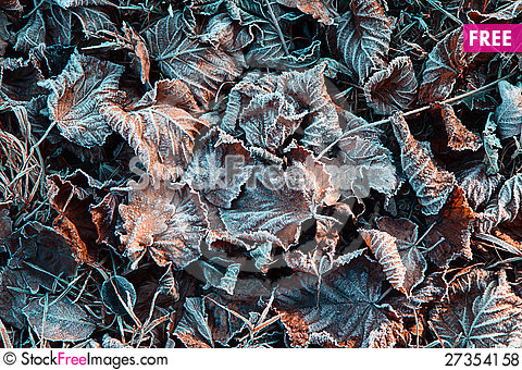 Free December Frozen Leaves Royalty Free Stock Photos - 27354158