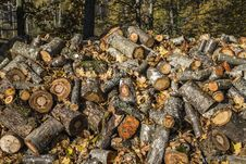 Free Fire-wood For Camp Fire At Morning Forest Royalty Free Stock Photos - 27350638