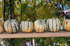Free Pumpkins Stock Image - 27350941