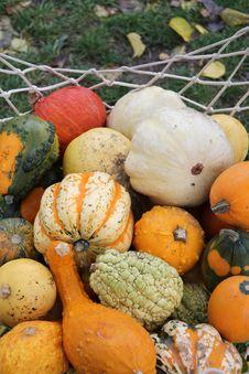 Free Various Pumpkins Stock Photos - 27351043