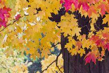 Free Fall Foliage Stock Images - 27351644