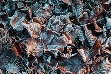 December Frozen Leaves Royalty Free Stock Photos