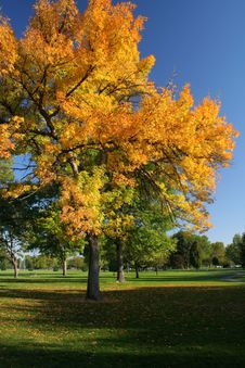 Free Colorful Autumn Tree Stock Images - 27354754