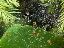 Free Spiders Web After Rainfall Stock Image - 27354881