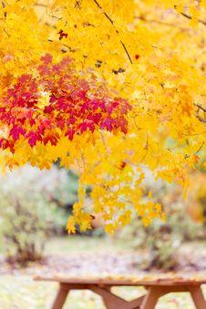 Free Fall Foliage Stock Photos - 27354963