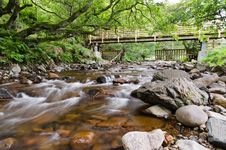 Free Forest Stream Stock Photography - 27355302
