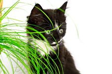 Free Cat And Grass Stock Photography - 27355552