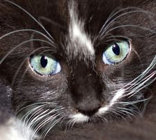 Free Cat Eyes Royalty Free Stock Photography - 27355577