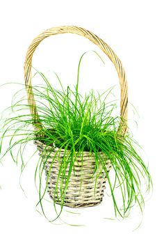 Curly Grass In The Basket Royalty Free Stock Photography