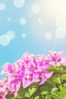 Free Pink Flowers Stock Image - 27355801