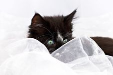 Kitten Peeping Through Fabric