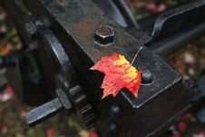 Free Leaf And Railway Metal Piece Stock Photo - 27358560