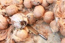 Free Coconut Stock Photos - 27359943