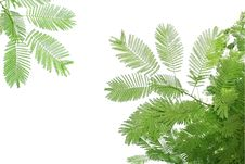 Green Leaves And Branches ,Include Clipping Paths Stock Photo