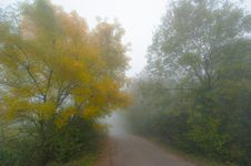 Autumn Foliage And Morning Mist In The Forest Royalty Free Stock Photos
