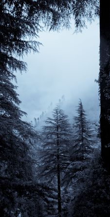 Free Forest In Mist Stock Images - 27362144