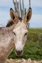 Free Donkey Stock Photo - 27372110