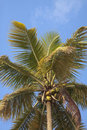 Free Palm Tree With Blue Sky Royalty Free Stock Images - 27372139