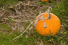 Free Pumpkin Stock Photography - 27370442